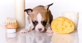 mini kutyák