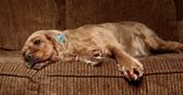 hosszú szőrű kutyák